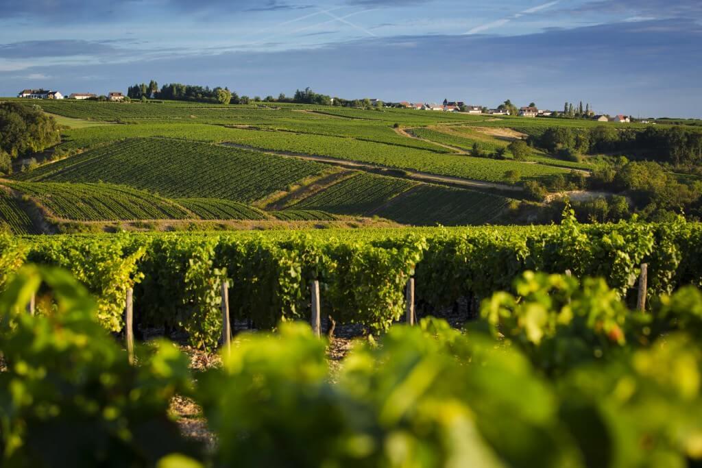 Village dans le vignoble de Chablis : Lignorelles