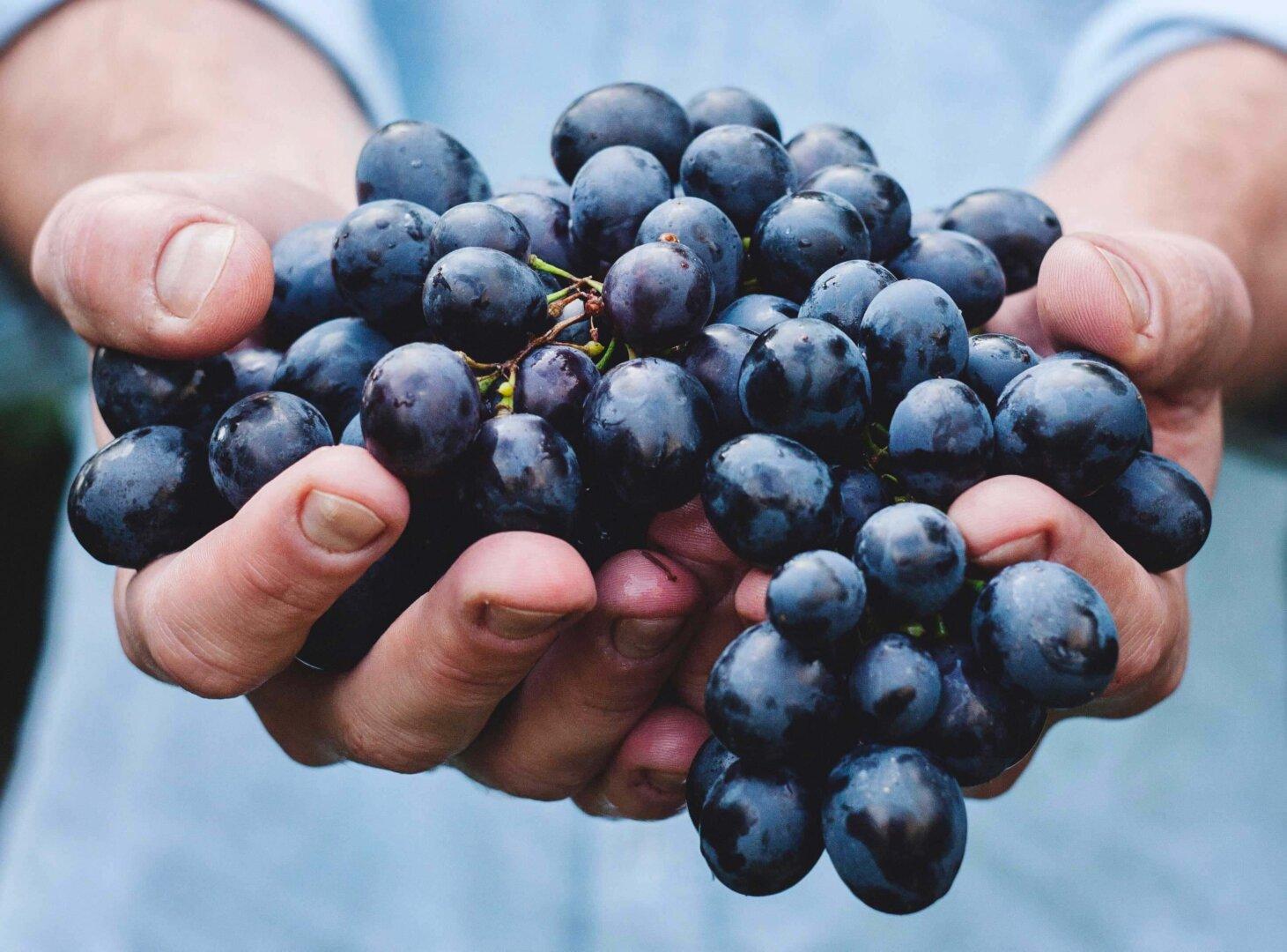 déguster simplement avec Elijence, agence de dégustation de vin à Dijon